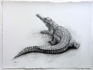'Crocodile' By Neal Griffin - water soluble graphite on handmade paper - 52cm x 64cm - £280 (inc Frame)