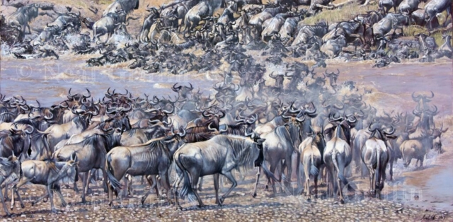 'The Crossing' (wildebeest) By Neal Griffin - oil on canvas - 63cm x 113cm - £1,900 (inc frame)