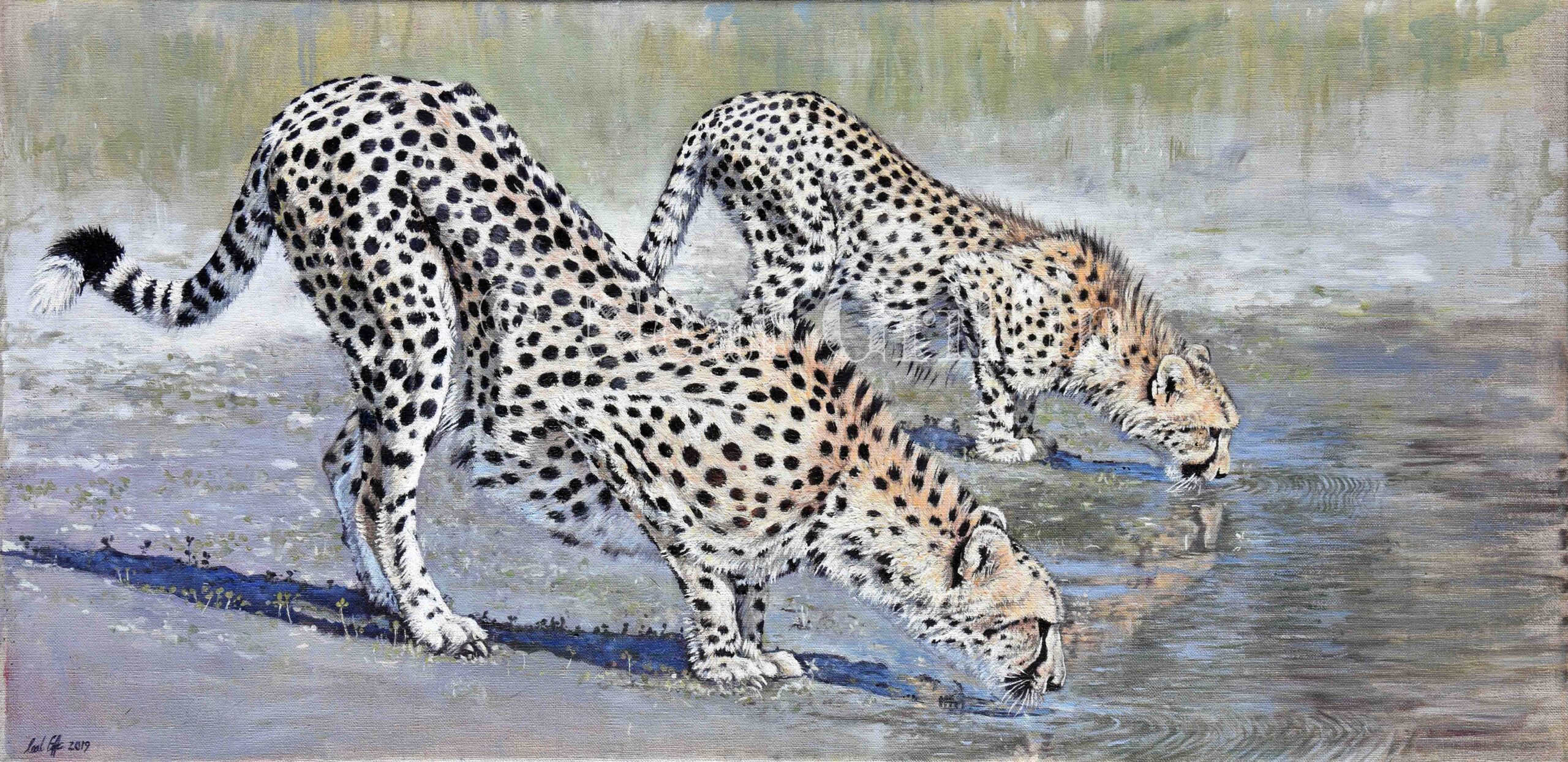 'At the Waterhole' (cheetahs) By Neal Griffin - oil on canvas - 91cm x 52cm - £950 (Inc frame)