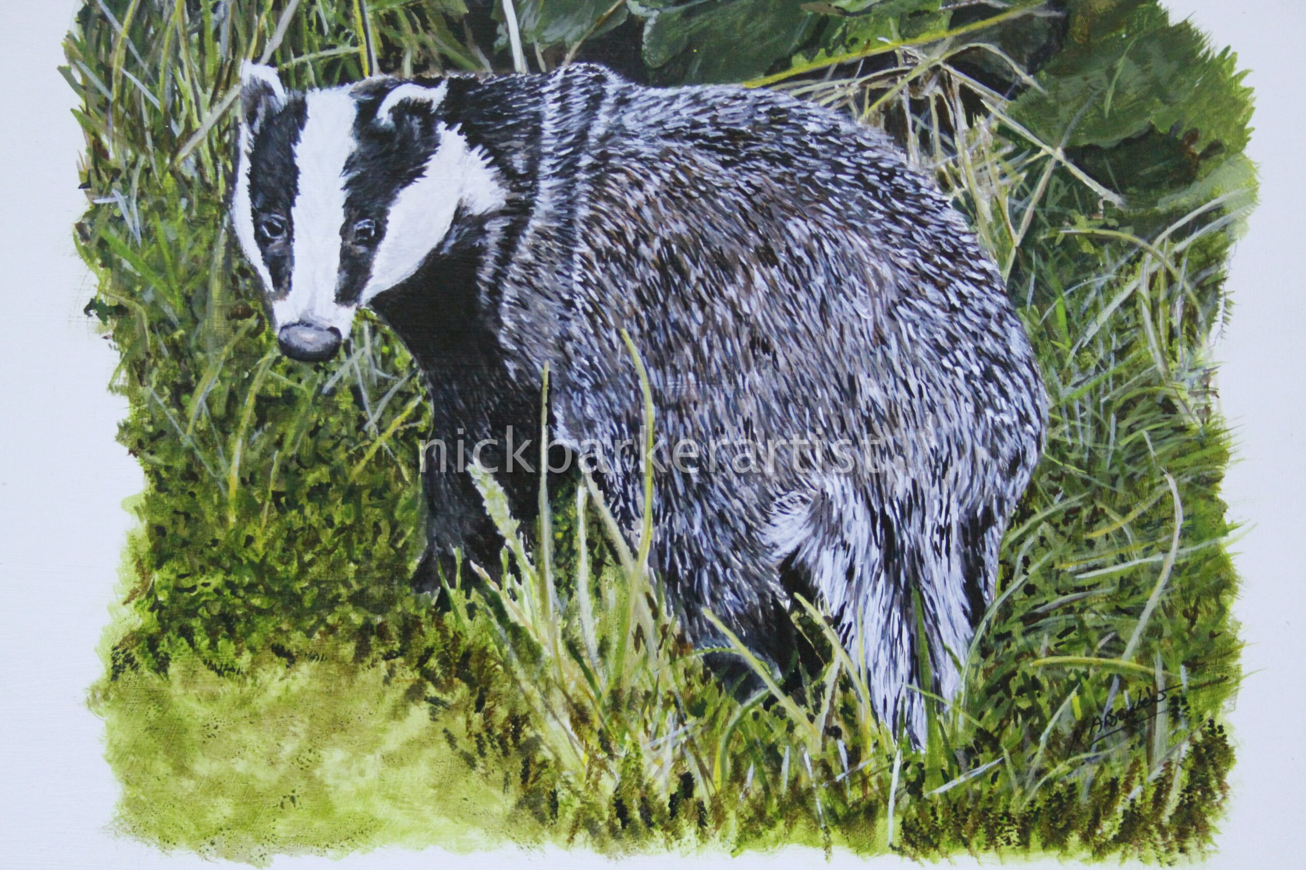 'Badger' By Nick Barker- 50cm x 45cm - Acrylic - £400