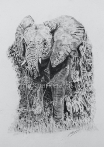 'Crashing Through' By Nick Barker - Graphite Pencil - 20cm x 26cm - £250 (unframed)