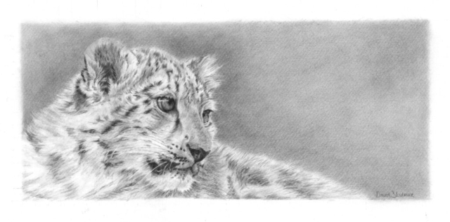 Daydreamer By David Skidmore – 47 x 21cm – graphite pencil on Fabriano Artistico hot press paper - £295