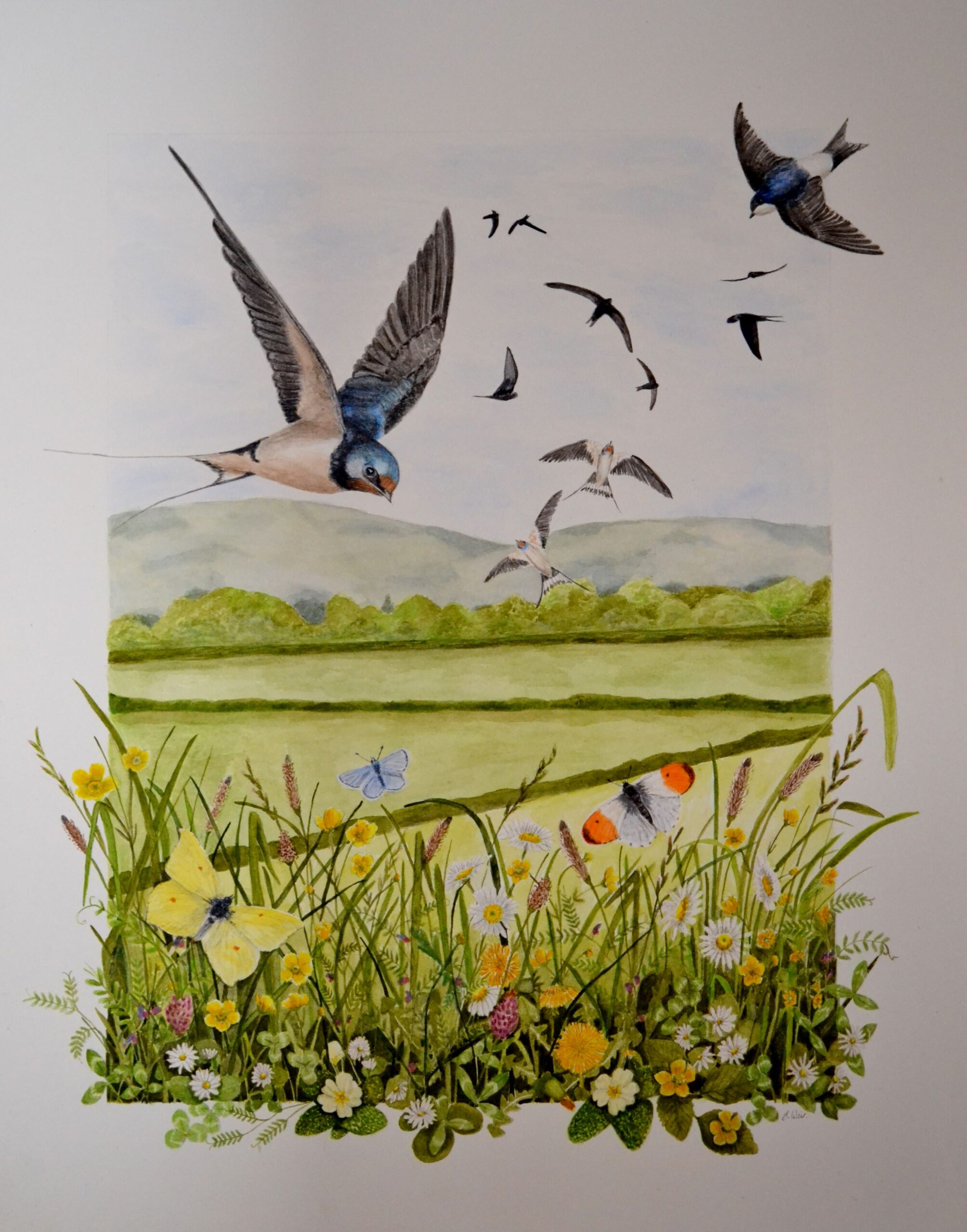 "'Here comes Spring' By Julie Weir - watercolour - £250 (swallows, housemartins & swifts) -16"" x 20"""