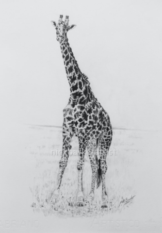 Hi! By Nick Barker - Graphite Pencil - 25cm x 35cm - £250 (unframed)