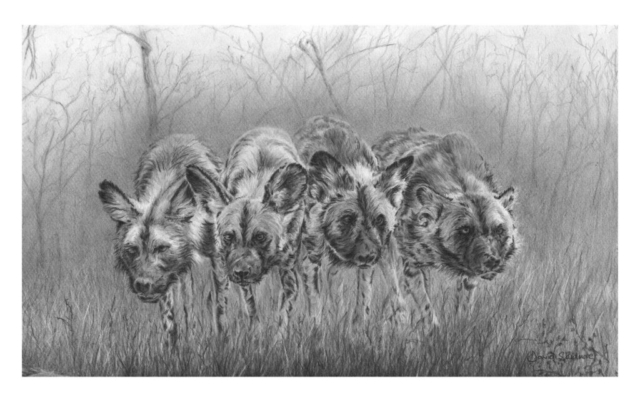Hunting Dogs By David Skidmore – 46 x 28cm – graphite pencil on Fabriano Artistico hot press paper - £750
