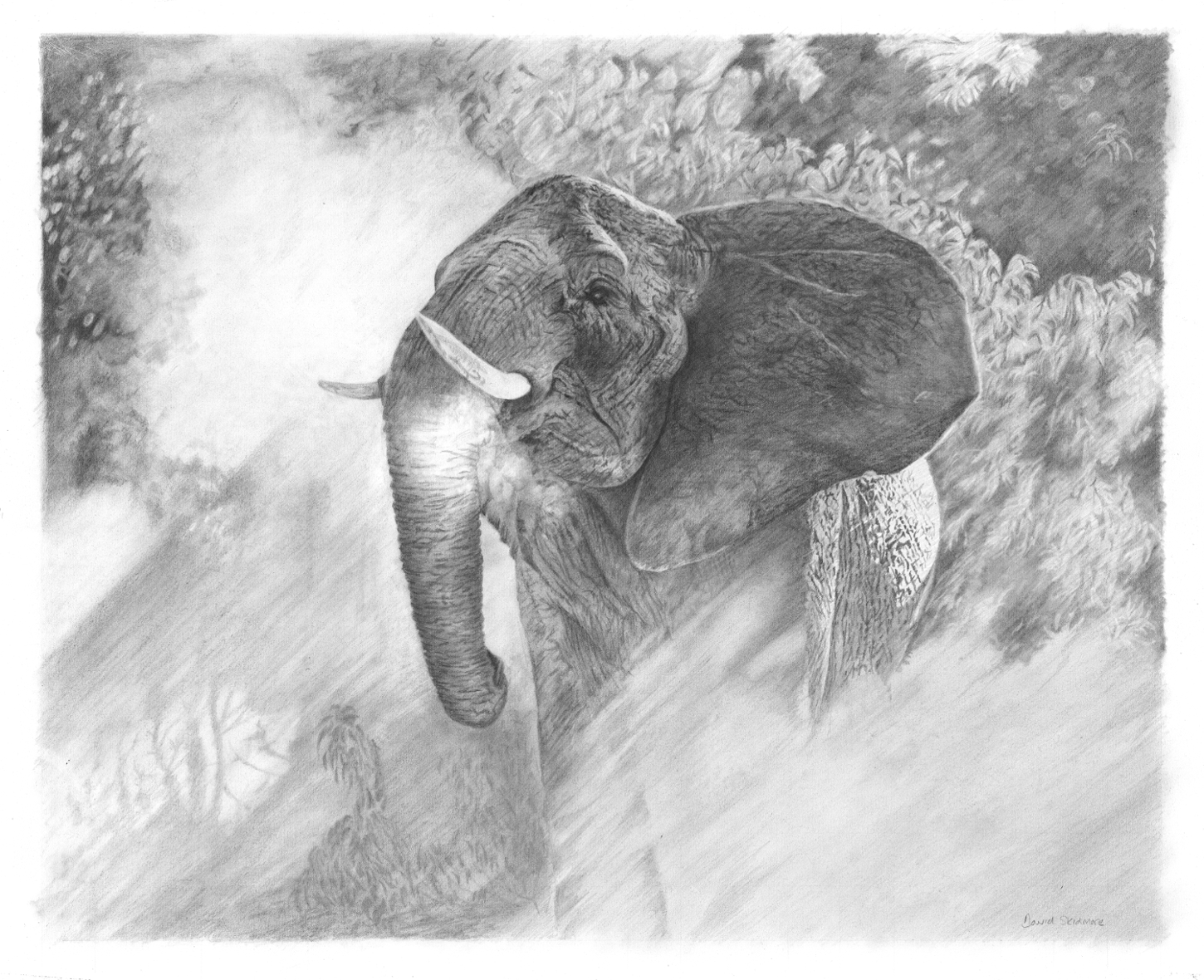 In the spotlight By David Skidmore – 62 x 51cm – graphite pencil on Fabriano Artistico hot press paper - £1250