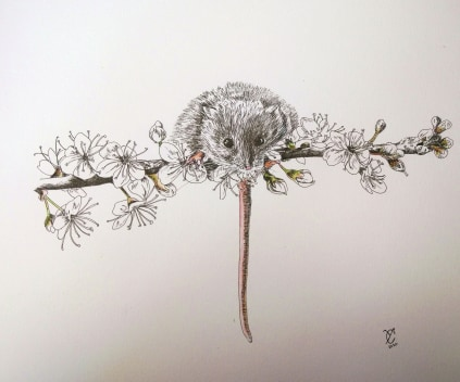 Blossom Mouse By Yvonne Castle - Pen & Ink 30.5x22.9cm £180