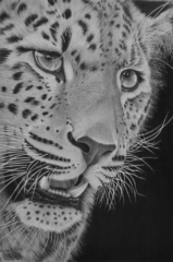 Close By By Richard Paulley - Graphite - Framed Original - 52x68cm - £350