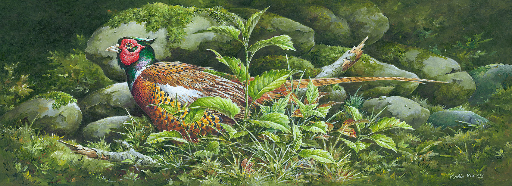 "Cock Pheasant. By Martin Rumary Acrylic 22""x 8"" (image size) £675"