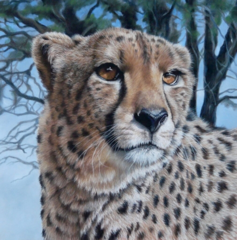 """""""Distant Gaze"""" By Kerry M Vaughan (cheetah portrait) Unframed Limited edition giclee print of 25. Fits frame 16"""" x16"""". £50 plus p&p"""