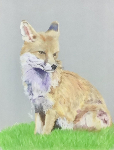 Foxy Friend By Carolynne Winchester - Coloured Pencil - Framed 33.5x38.5cm - £125