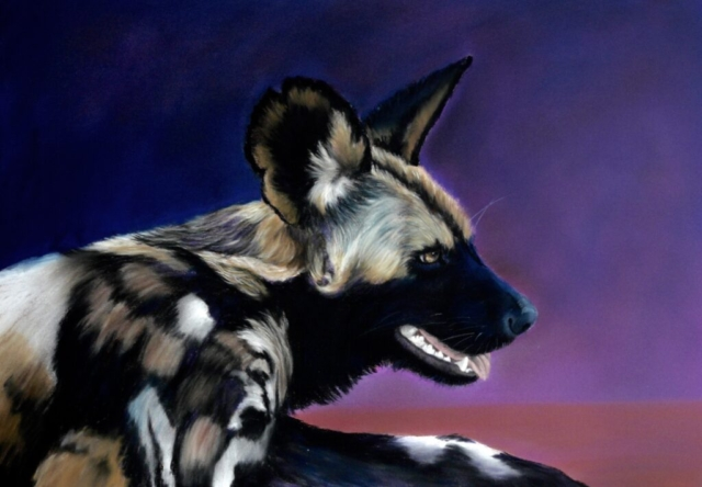 """Hot Work"" (African painted dog) By Kerry Vaughan Original pastel. Framed 52 x 40 cms. £320 plus p&p"