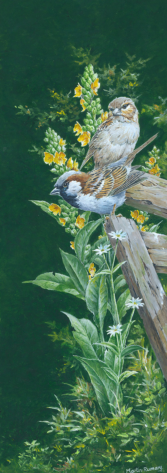 "House Sparrows By Martin Rumary Acrylic 6.5""x 18.5"" (image size) £450"