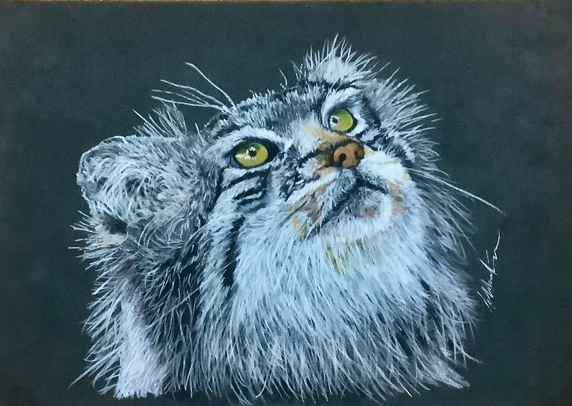 Jethro Pallas Cat By Carolynne Winchester - Coloured Pencil - framed 33.5x38.5cm £125