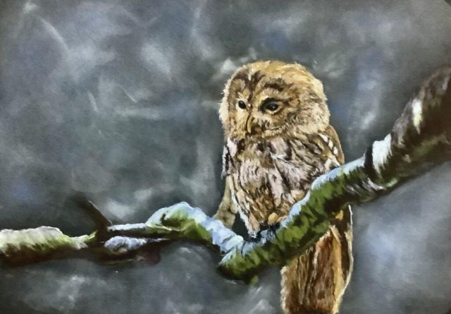 Owl by Moonlight by Carolynne Winchester - Coloured Pencil - Framed 33.5x38.5cm - £125