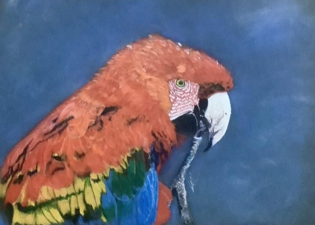 Pretty Boy by Carolynne Winchester - Coloured Pencil - Framed 33.5x38.5cm - £125