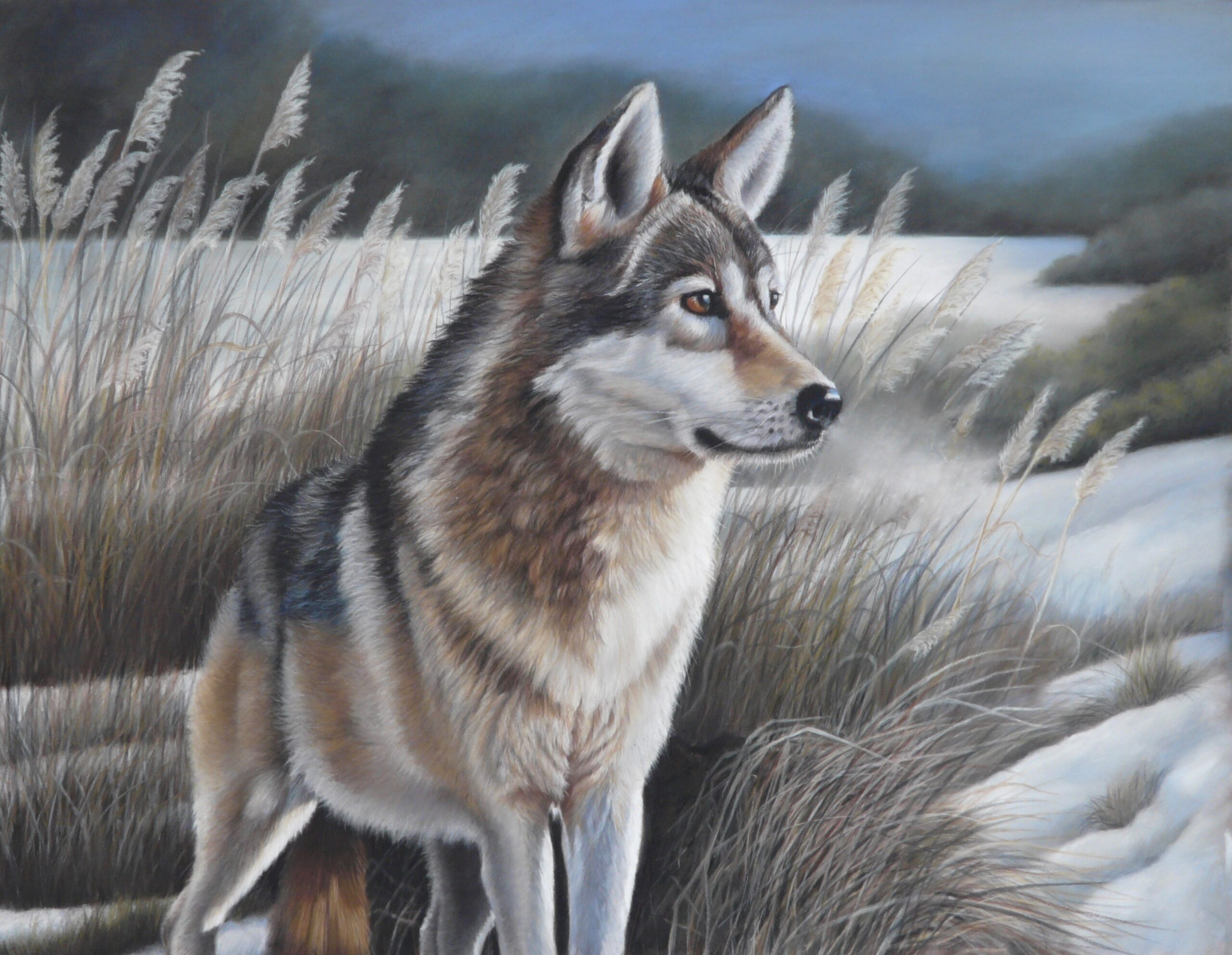 """Snow wolf"" By Kerry Vaughan Original pastel. Framed 64x54cms. £325 plus p&p"