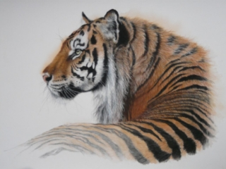"""""""Vanishing colours"""" By Kerry Vaughan Original tiger pastel. Framed 53x43 cms. £350 plus p&p"""