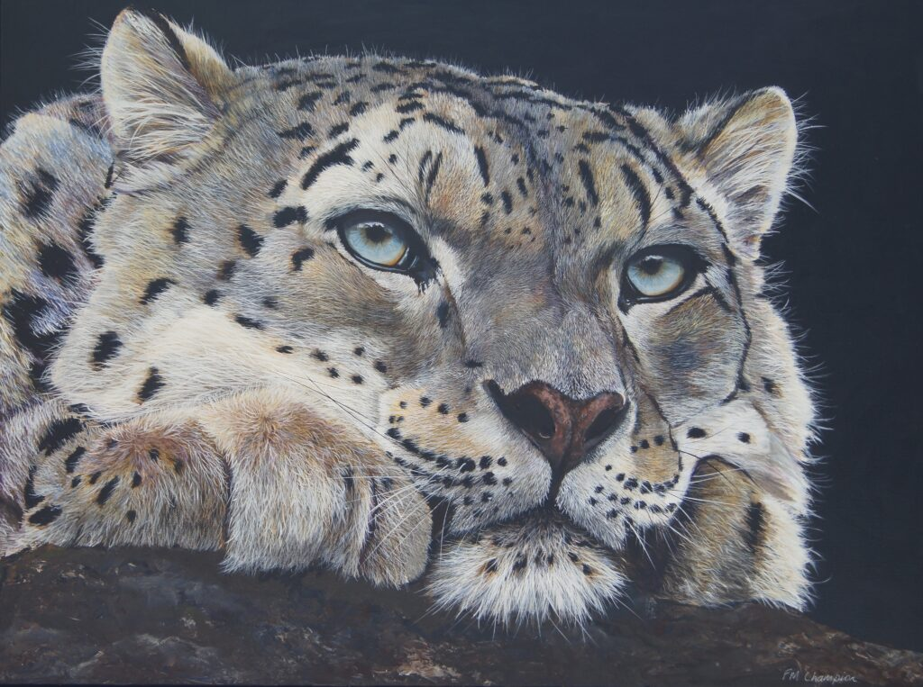 "Winner of the Public Vote 2019 ""Snow Leopard"" by Fiona Champion"
