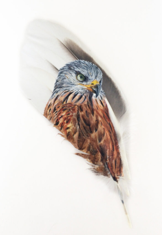 "Enchanting Gaze By Mandi Baykaa-Murray (Red Kite on Duck Feathers) Approx 12"" x 10"" - £350"