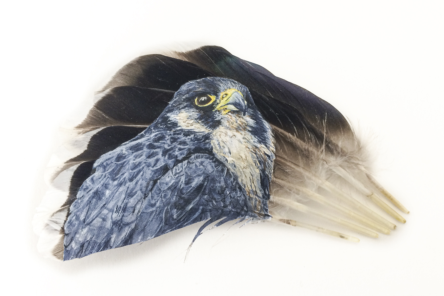 "Intense Observation By Mandi Baykaa-Murray (Peregrine Falcon on Mallard Feathers) - 7"" x 9.5"" - £325"