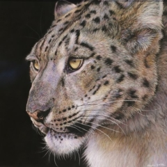 Snow Spirit by Angela May Smith - Pastel - 21x21in - £425