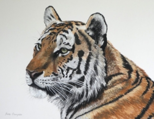 """Tiger By Fiona Champion - Pastel - 29"""" x 25"""" - £395 (framed)"""