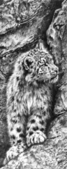 Snow Leopard (Untitled) by Jamie Boots £5,800