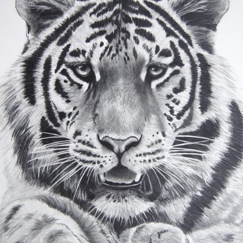 """In My Sights By Fiona Champion - Graphite  - 29"""" x 25"""" - £395 (framed)"""