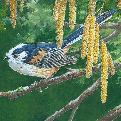 "Long-Tailed Tit By Martin Rumary Acrylic 9.5""x 4.5"" (image size) £150"