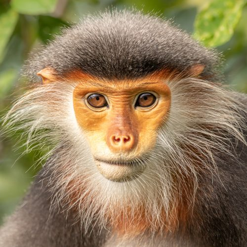The Most Beautiful Monkey in the World by Matther Akister – Photograph – – £105
