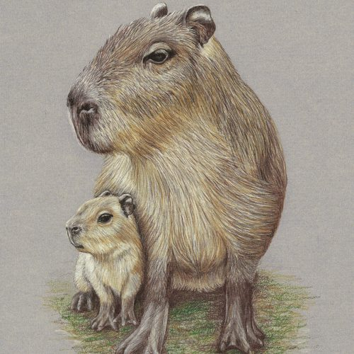 "Watch With Mother (Capybara) - by Helen Clifford - coloured pencil - 7"" by 10"" plus mount - £90"